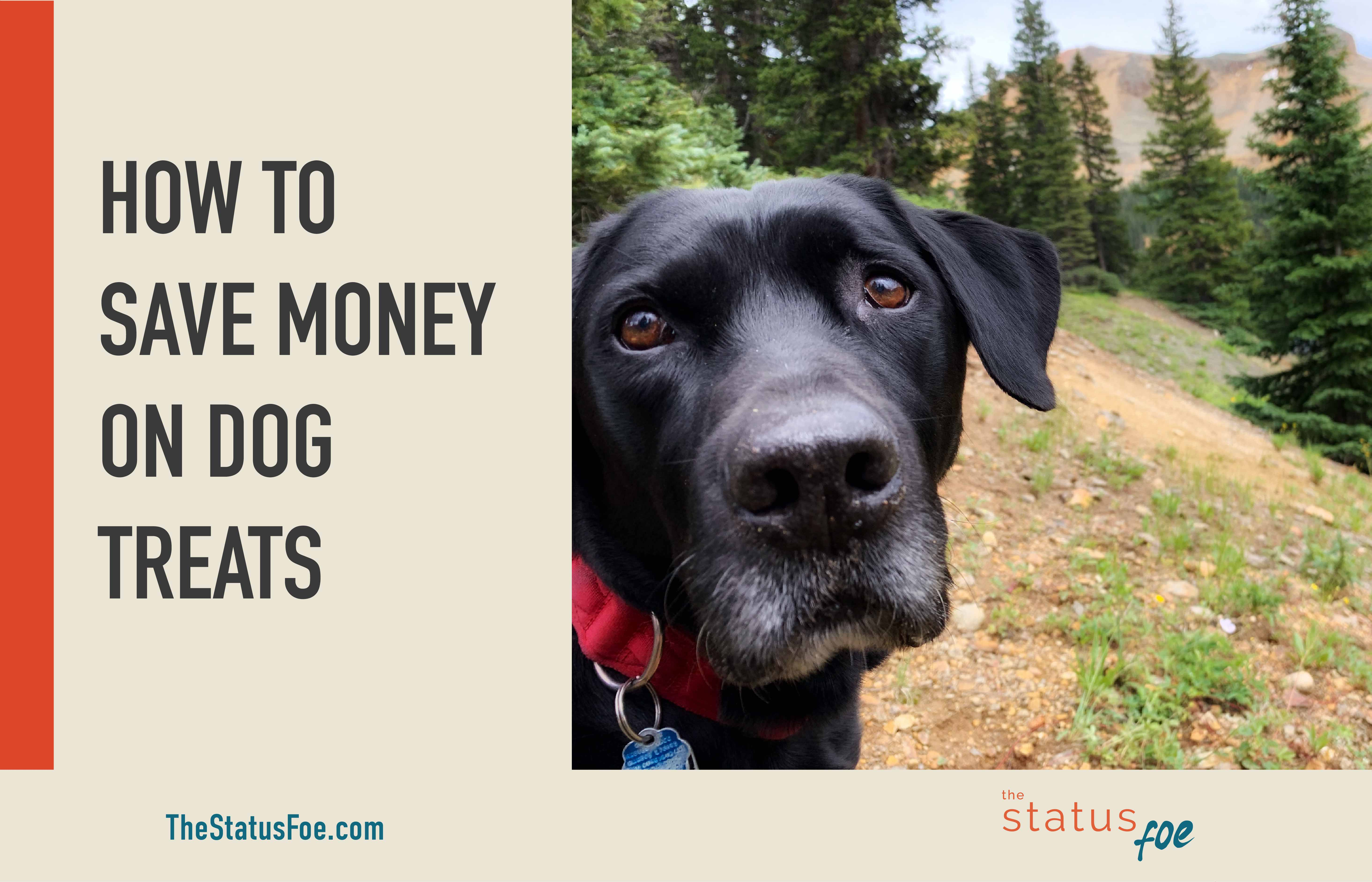 How to Save Money on Dog Treats | Frugal Pets